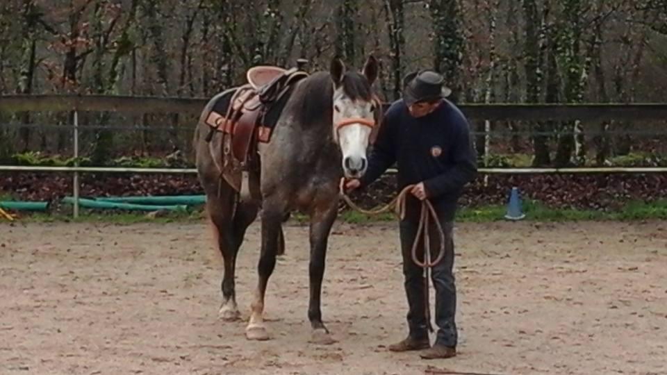 Stage éducation du cheval, les 28 et 29 mai 2016 (cliquez sur l'image)
